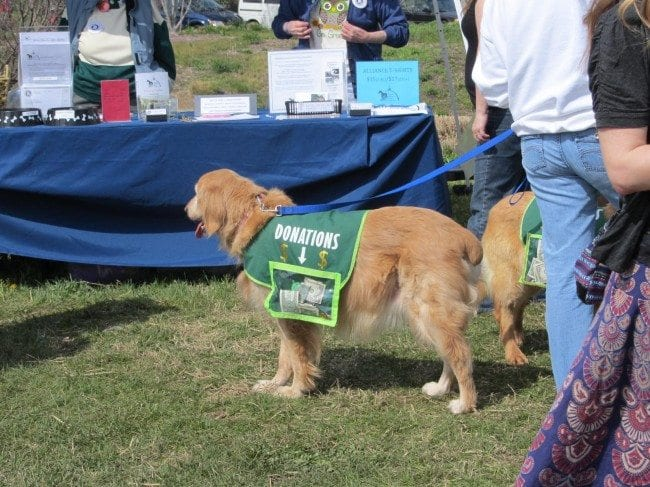 Dog Friendly Event - Earth Day St. Louis | Arch City Homes
