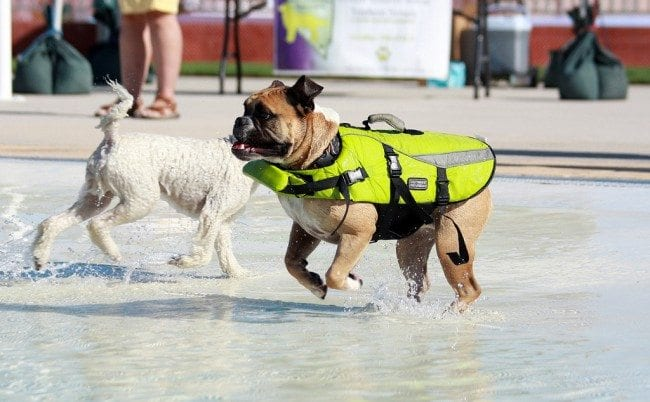 St. Louis Dog Events ~ Community Swimming Pool Parties - Arch City HomesSt. Louis Dog Events ~ Community Swimming Pool Parties - Arch City Homes