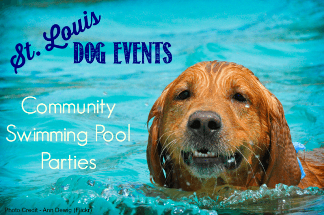 Dog swimming pool parties