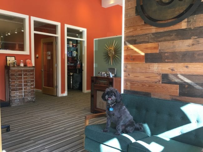 Circa Properties LOVES Dogs | Arch City Homes
