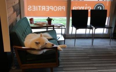 Circa Properties LOVES Dogs
