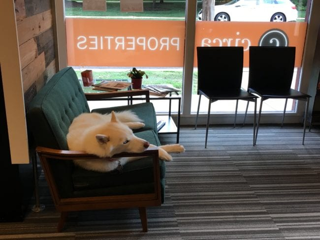 Circa Properties LOVES Dogs   Arch City Homes